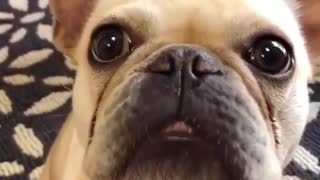 Funny Way Dog Moving His Mouth - Video