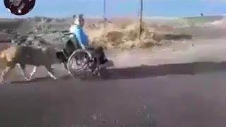 the dog helps its owner to push the wheelchair