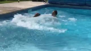 Large brown dog pool dive