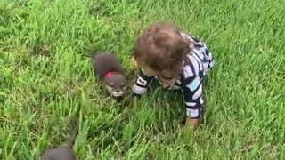 Baby plays in grass with cute baby otters