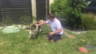 Dog Reunited with Owner - Video
