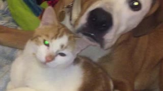 puppy hugging he's best friend kitten - Video