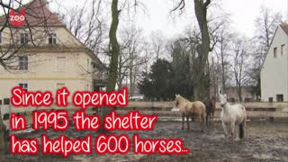 Polish Horse Sanctuary - Video