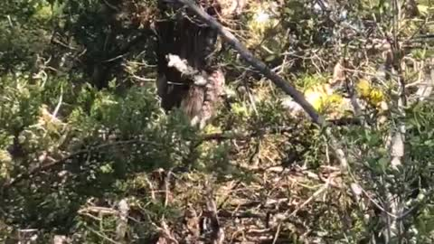 Gigantic Snake Slithers Way Up Tree
