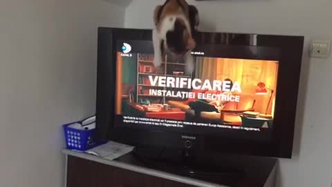 This is how my kitten watch the TV. Funny!