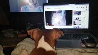 Watching other dog vids