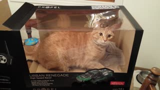 12 cats who love their boxes