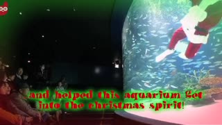 Santa Swims With Stingrays - Video