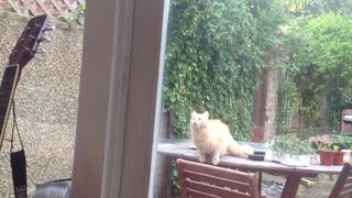 Cat performs amazing leap to get through window - Video