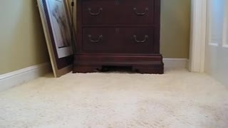 Cat Hides After Move - Video