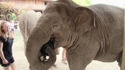 Caring elephant shows deep affection towards human friend
