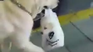 Mother dog carries puppy in plastic bag - Video