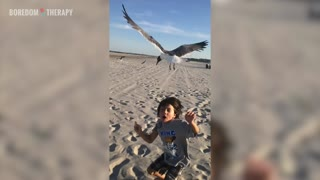Don't feed seagulls, kids - Video