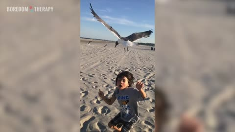 Don't feed seagulls, kids