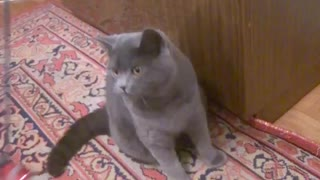 Played by British cat Timofei - Video