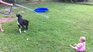 Baby can't stop laughing at dog chasing water hose - Video