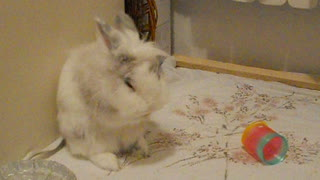 Grooming bunny rabbit will melt your heart! - Video