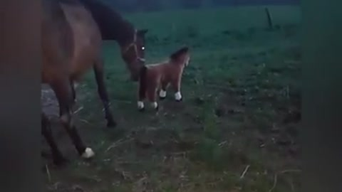 Horse With Fake Friends