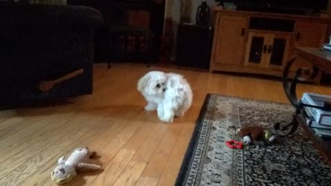 Bored Pup Discovers Her Tail And Has A Blast!