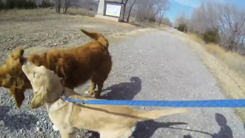 Dog meets her mom for first time since puppy-hood!