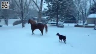 Horse and Doberman enjoy playtime following fresh snow fall! - Video