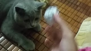 Was this kitten raised by dogs? - Video