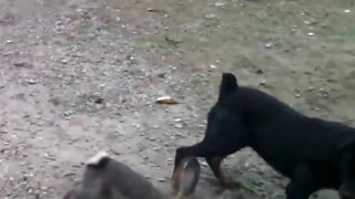 hilarious dogs 01 FB - Video