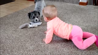 Puppy and baby battle for toys - Video