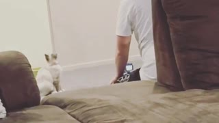 Cat Looking Sharp at her Moving Toy - Video