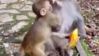 Funny reaction of animals want attention