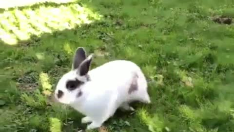 Rabbit plays in A Very Fast Way