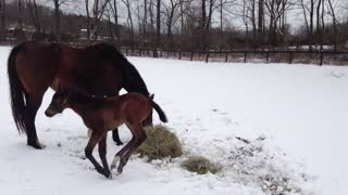This Baby Horse Experienced Snow For The First TIme