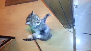 Cat Goes Crazy Against Stick