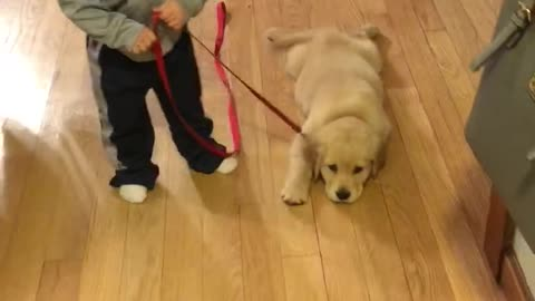 adorable golden pup and her toddler
