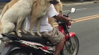 Dog Motorcycle Carpool