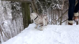 Cat enjoying winter!  - Video