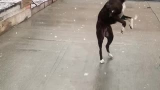 Doggo's Have Delightful Time Catching Snowflakes