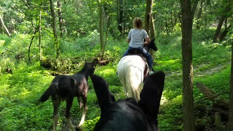 Adorable 2 month old foals going out on trails