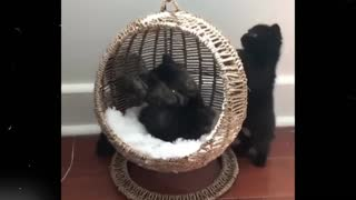 Crazy and Funny cats Compilation & Laught all the time - Video