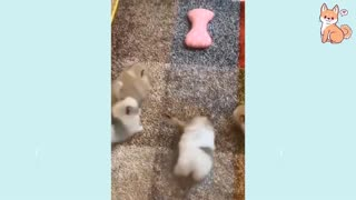 Cute Puppies Cute Funny and Smart Dogs Compilation #3