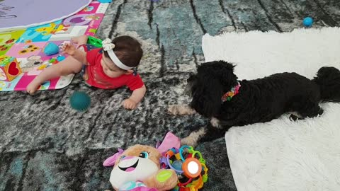 Gentle dog successfully plays fetch with baby