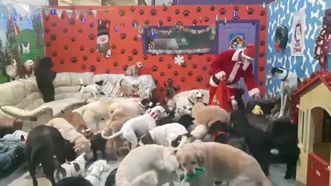 Santa Paws delivers toys to all the good doggies