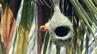 Bird outside a hanging nest - With great music