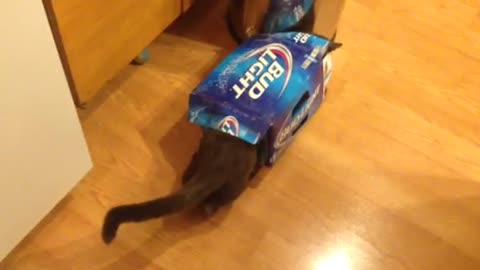 Cat Jumps Through Beer Box