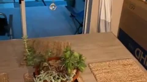 Baby Gator Invades Home During Tropical Storm