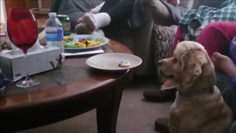 Totally obedient dog refuses to give in (ends up getting a cookie!)