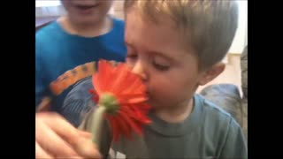 Little Boy Loves Flowers But Is Scared Of Flower Petals - Video