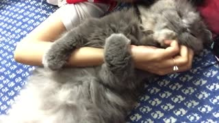 Cat loves to hug, won't let go of owner - Video