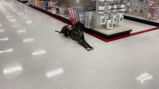 Service Dog: More Public Access During Covid-19 Stuffs!