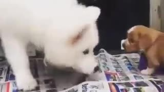 Brave Little Cute Puppy - Video